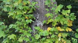 Rötha, Schlosspark: hier wachsen besondere Gehölze und es gibt Gartenseminare (© S. Baudisch 2013)